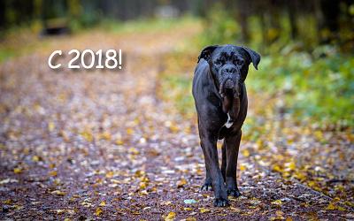 С Новым 2018-м годом!