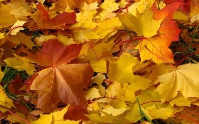 Другая осень